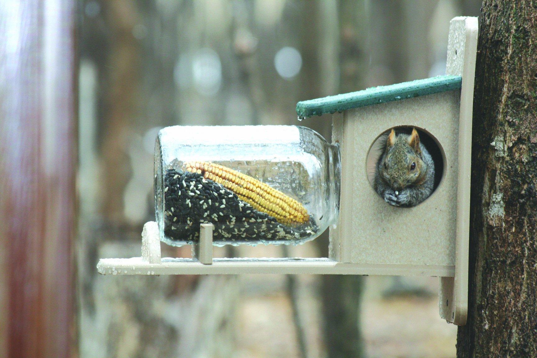 Birds Choice Squirrel Jar Feeder