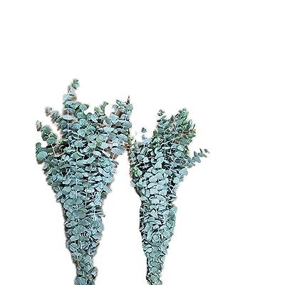 Fresh Eucalyptus True Blue x 2 Bunches : Garden & Outdoor