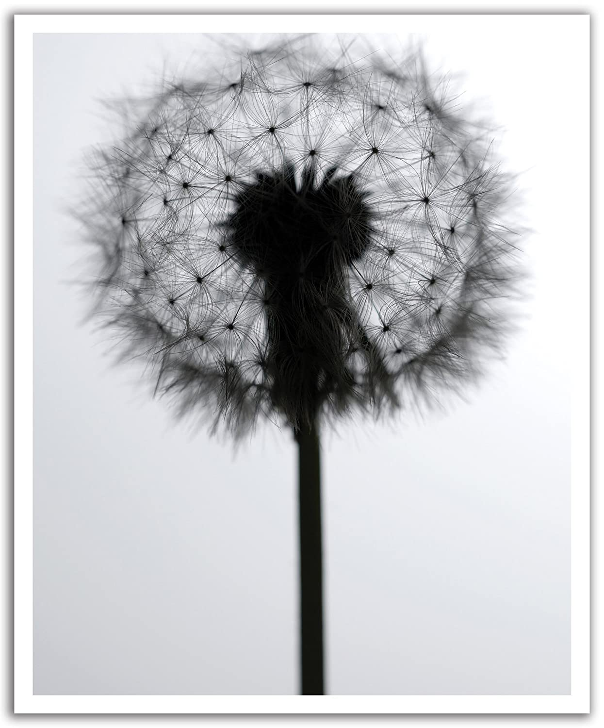 19.75-Inch x 24-Inch JP London POSLT0080 uStrip Lite Removable Wall Decal Sticker Mural Waiting for Wind Wish Dandelion
