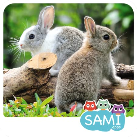 Amazon.com: Sami Tiny Flash Cards Animals preschool kids ...