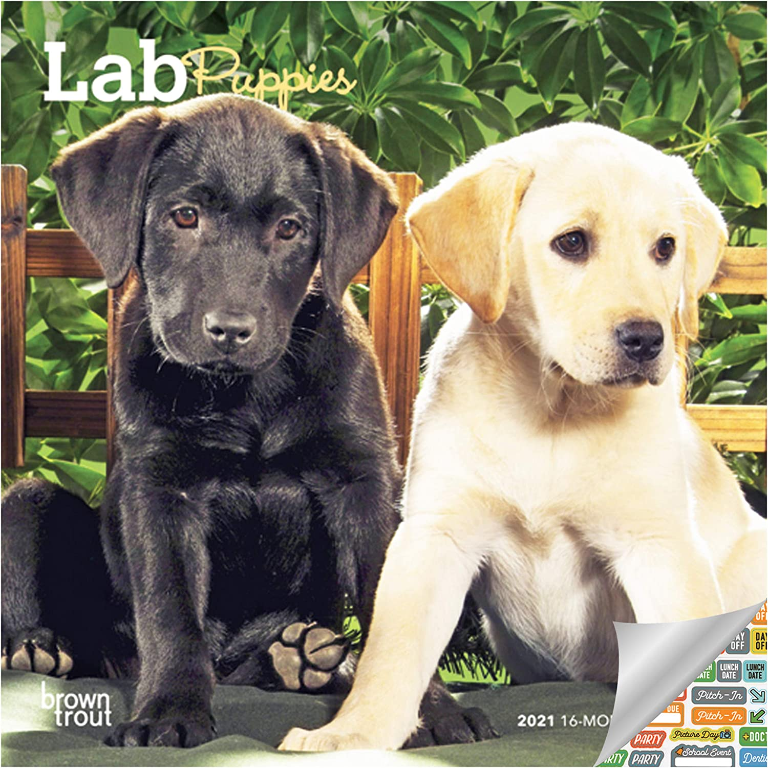 Lab Puppies Calendar 2021 Bundle - Deluxe 2021 Labrador Puppies Mini Calendar with Over 100 Calendar Stickers (Puppy Gifts, Office Supplies)