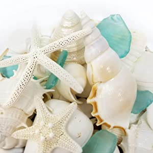 Tumbler Home White Seashells with Sea Glass - Home Decor Wedding Luxury Sea Shell Mix, Christmas or Crafts - 30+ Items