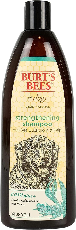 Burt's Bees Care Plus+ Sea Buckthorn & Kelp Strengthening Shampoo for Dogs