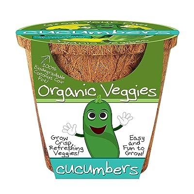 DuneCraft Cucumbers Organic Veggies Science Kit: Toys & Games