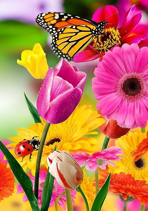 Bandera de Judy Tulip Zinnia Jardín Bandera Mariposa Colorido Primavera Verano Blooms Doble Cara 12, 5