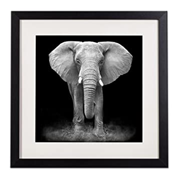 Framed Elephant Portraits Canvas Prints Wall Art Decor Wildlife Animal  Poster Black And White Picture Paintings