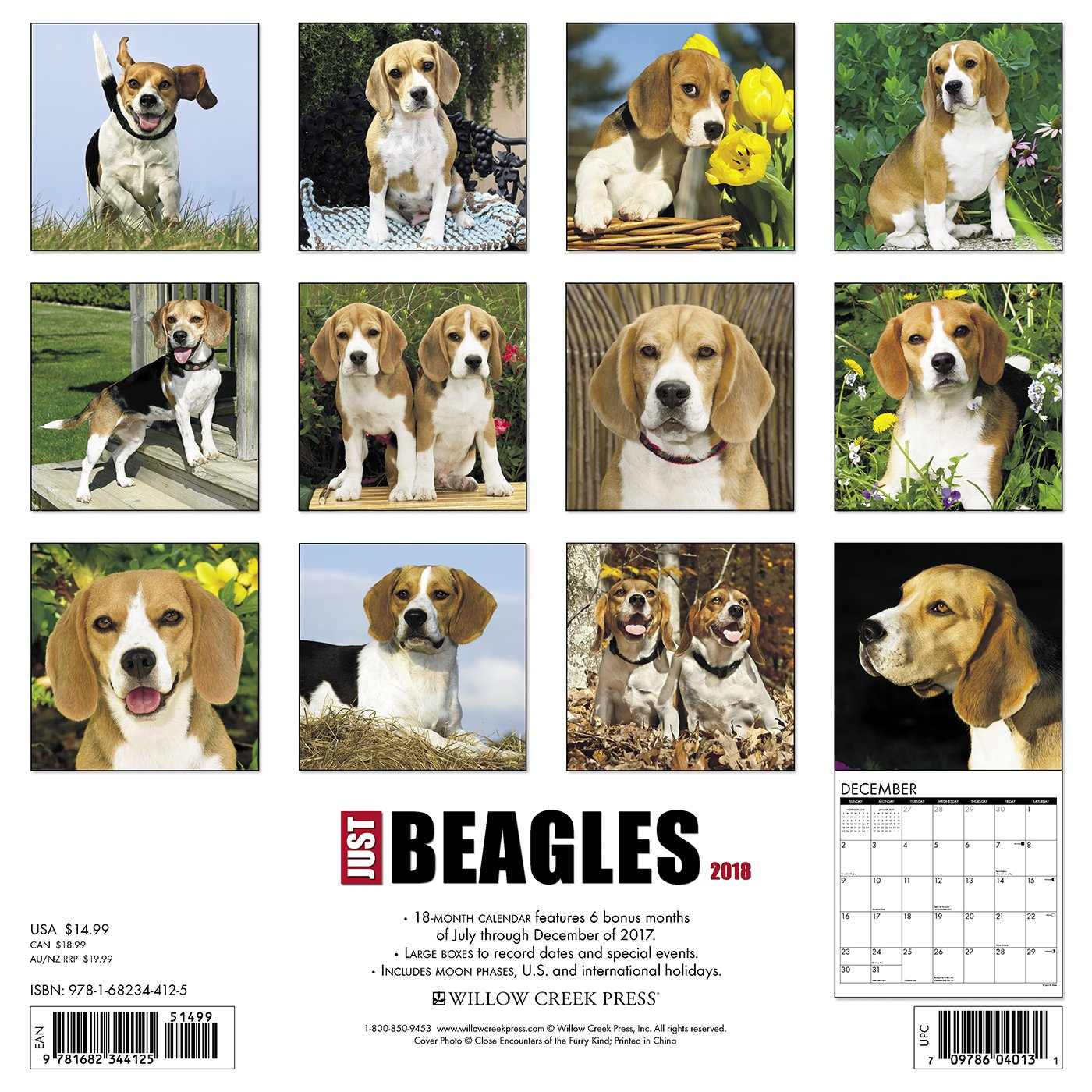 Must see Wisconsin Beagle Adorable Dog - 81sHfNiJVRL  Perfect Image Reference_6952  .jpg