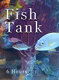 Fish Tank hours Douglas Chick product image