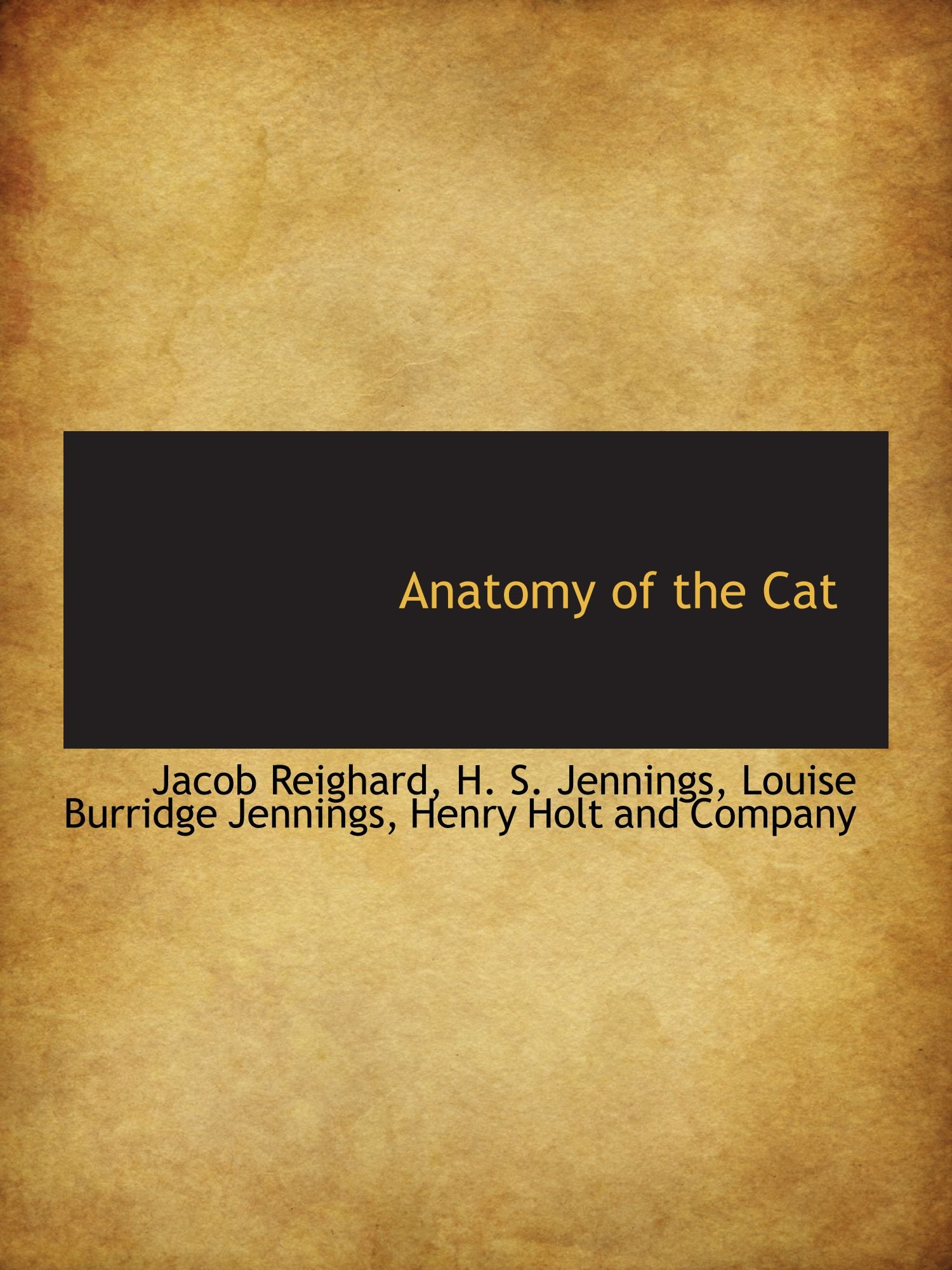 Buy Anatomy of the Cat Book Online at Low Prices in India | Anatomy ...