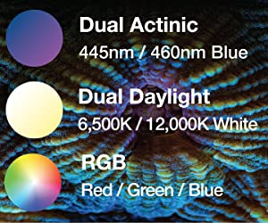 Dual Daylight and Dual Actinic