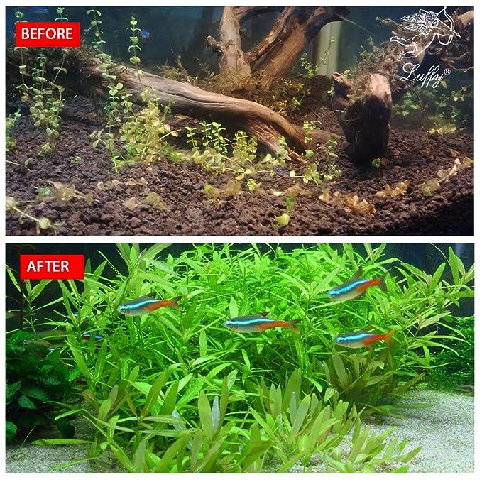 Semillas de plantas Luffy para acuario-Planta verde vibrante para acuarios de peces de agua dulce - Plantas de alfombra fáciles de cultivar para ...