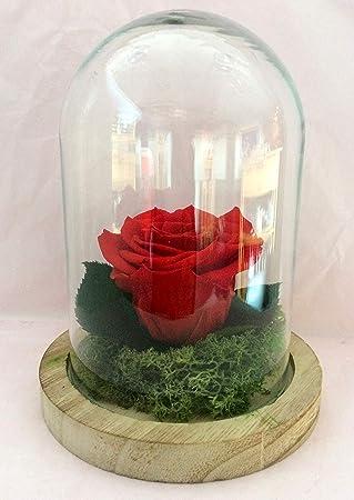 Rose Eternelle Rouge Sous Globe Rose Et Feuilles De Rose