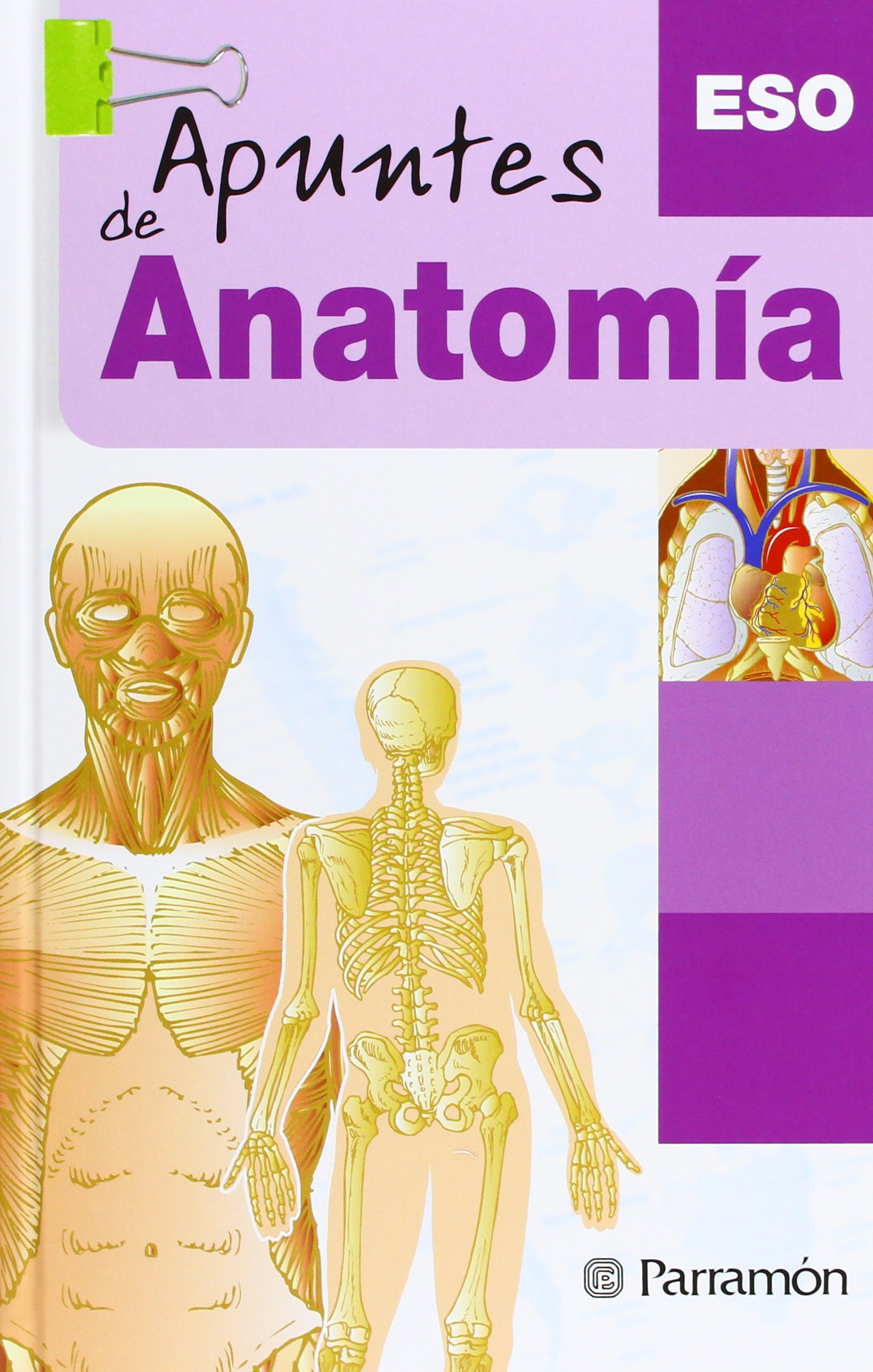 Apuntes De Anatomiaanatomy Notes Spanish Edition Parramon