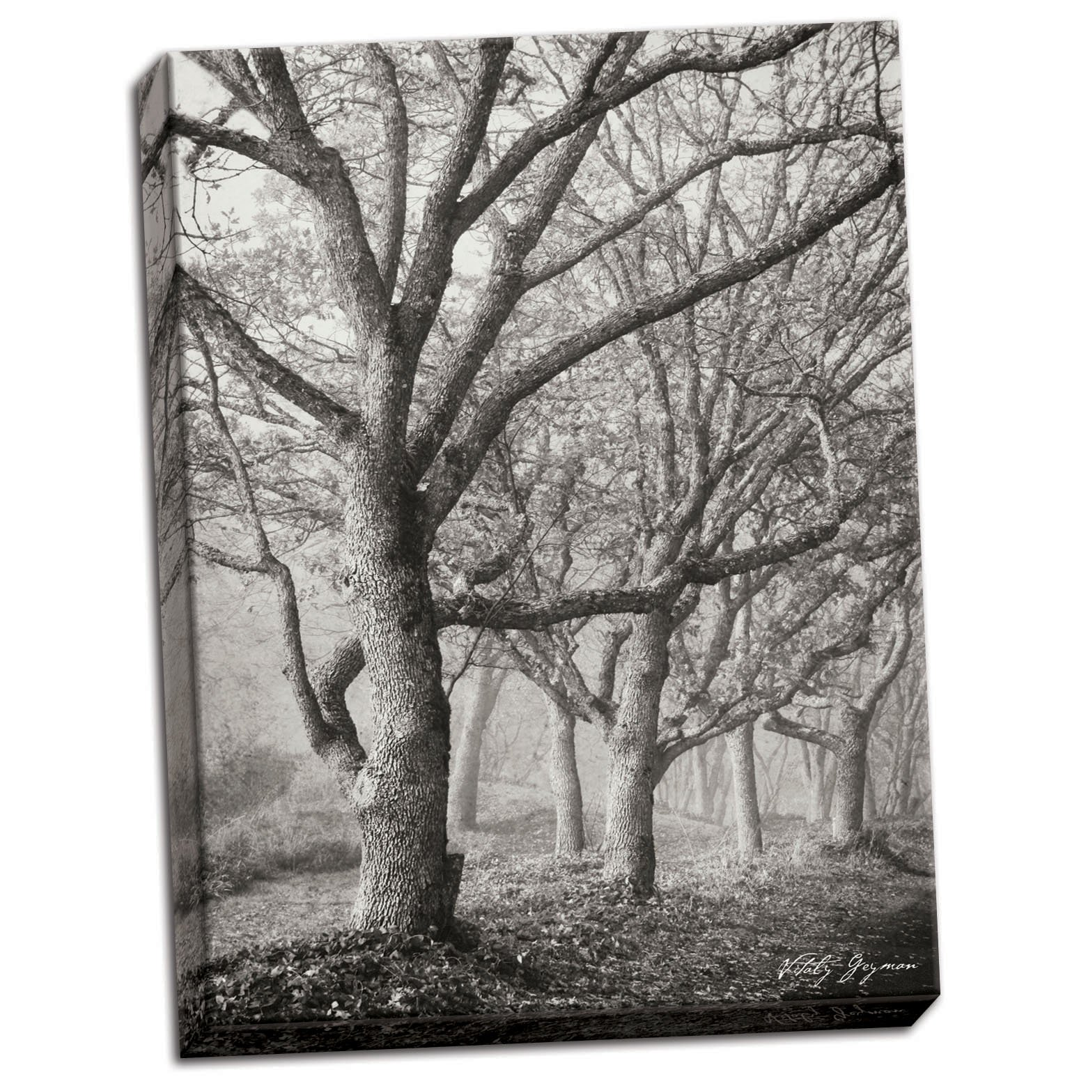 Tree in the Mist V B&W, Fine Art Photograph By: Vitaly Geyman; One 18x24in Hand-Stretched Canvas