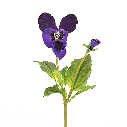 Risultati immagini per violetta fiore