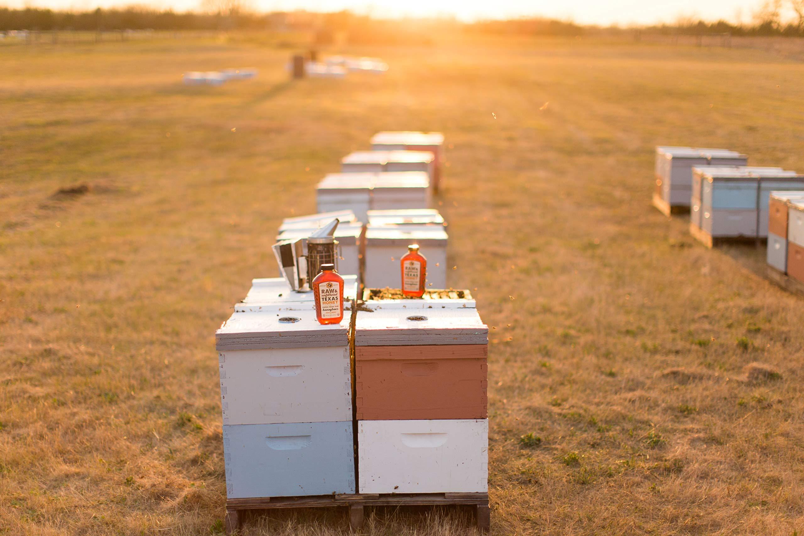 Raw, Unfiltered, Unpasteurized Texas Honey by Desert Creek Honey 5 Gallon (60 lbs) Bulk Bucket Non-GMO, Kosher by Desert Creek Honey (Image #8)
