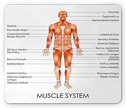 Amazon Ambesonne Human Anatomy Mouse Pad Muscle System Diagram
