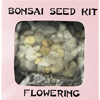 Eve's Dogwood Seed Kit, Flowering, Complete Kit to Grow Dogwood Bonsai from Seed : Bonsai Plants : Grocery & Gourmet Food
