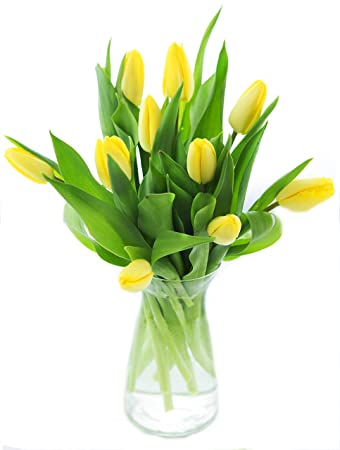 Amazon Bouquet Of 10 Yellow Tulips Farm Fresh From Holland