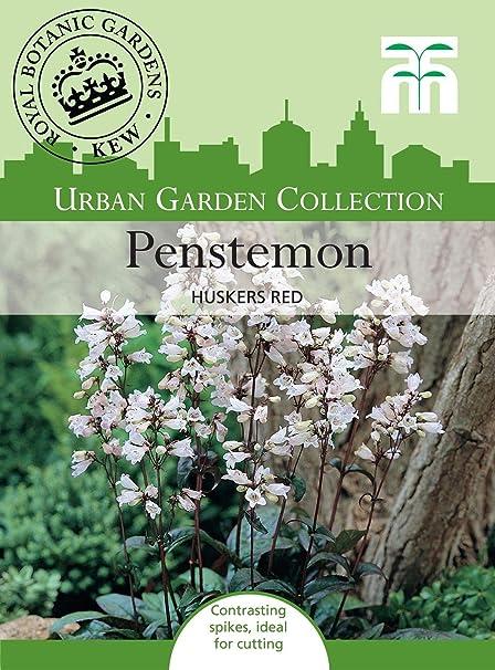 Portal Cool Thompson & Morgan - jardÃn de flores urbanas ...
