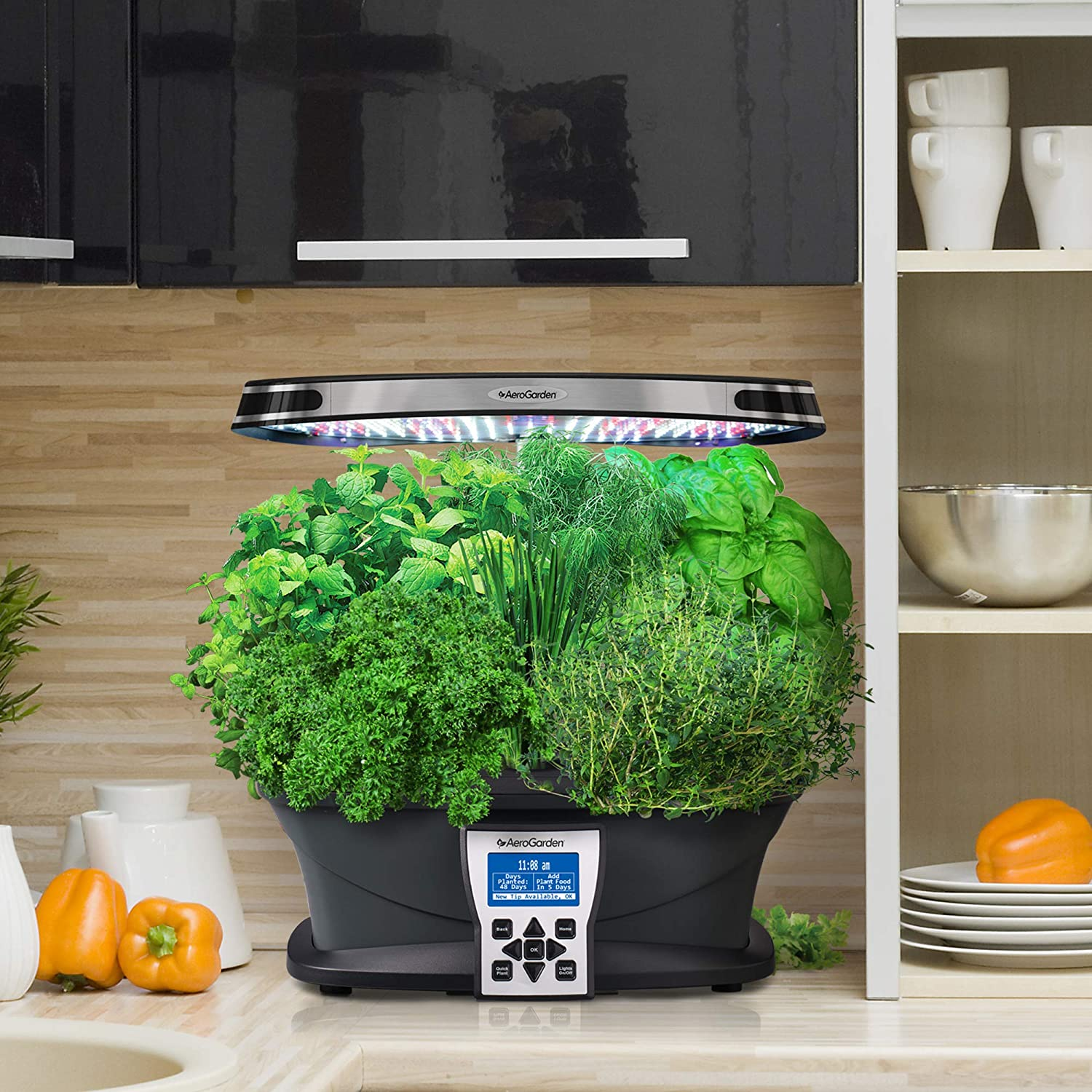 things-to-consider-when-buying-aerogarden-in-2021