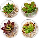 Set of 4 Decorative Mini Modern Design Clear Round Artificial Succulent Plant Glass Display Vases