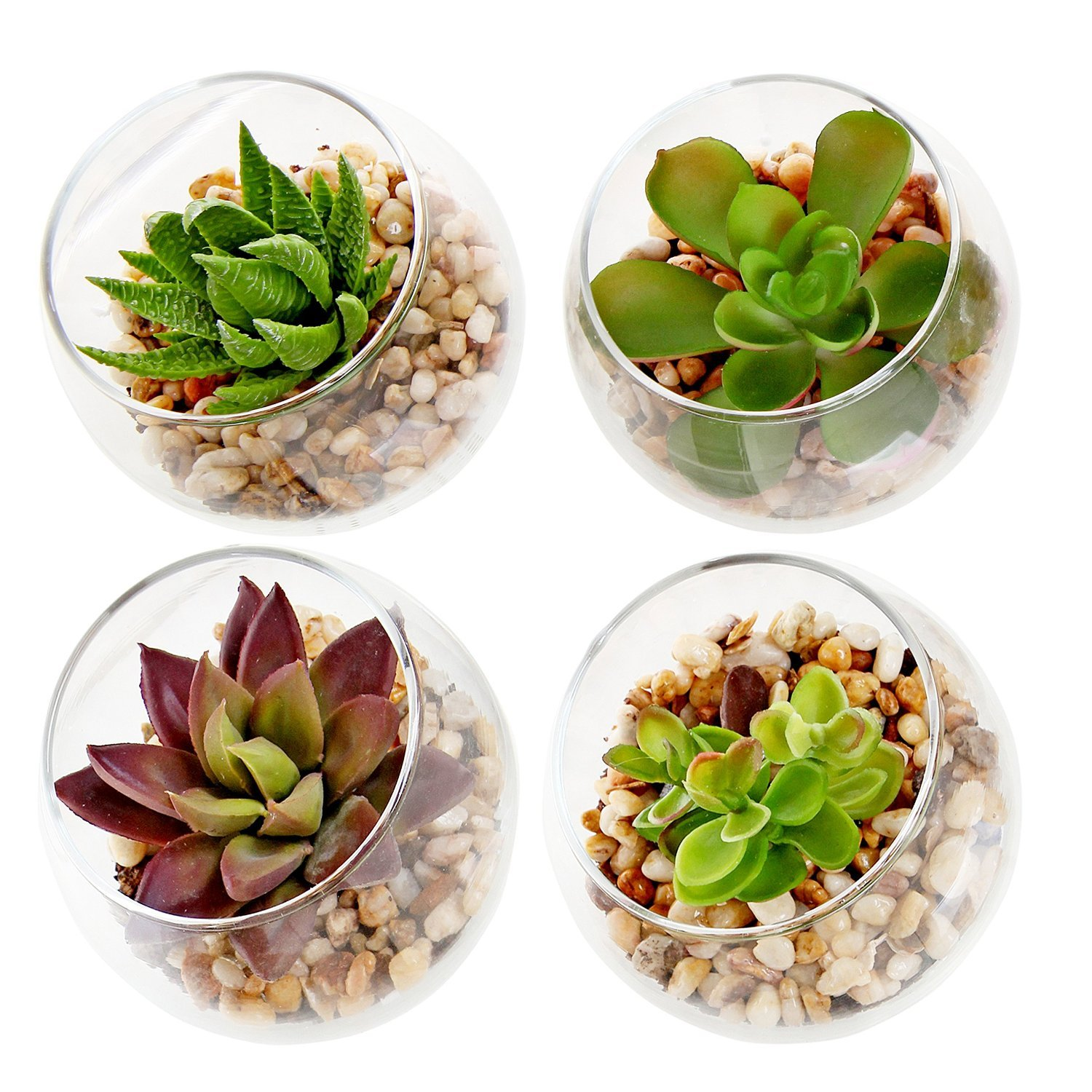 amazoncom set of 4 decorative mini modern design clear round artificial succulent plant glass display vases home u0026 kitchen