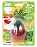 Dunecraft Tasty Herb Egg Science Kit