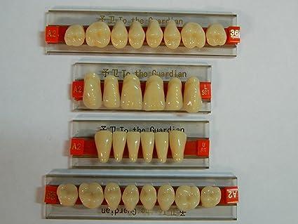 Halloween Horror Prop - Dental Quality Resin Teeth for Prop Building!