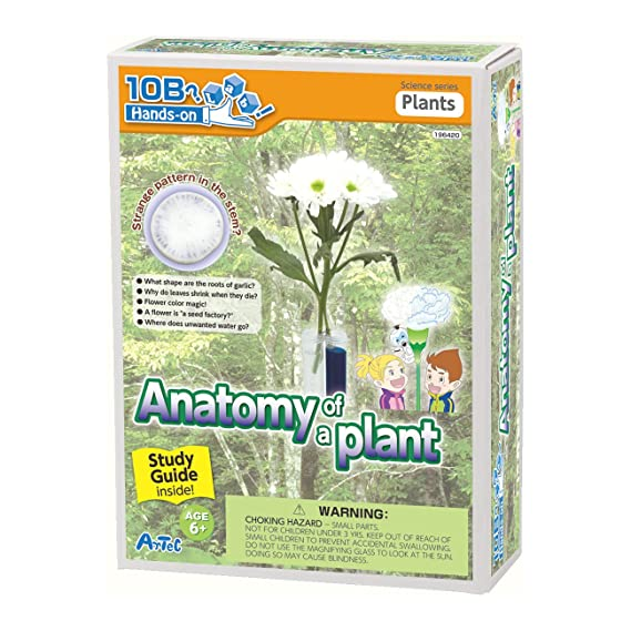 Amazon Anatomy Of A Plant Experiment Kit And Study Guide Toys