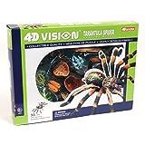 4D Vision Tarantuia Anatomy Model