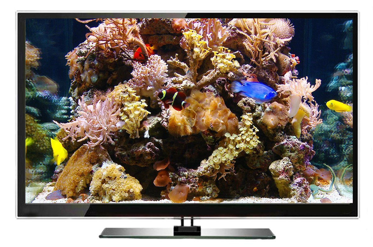 DVD de acuario - Agua dulce y acuario tropical - 2 horas de acuarios galardonados de Asia: Amazon.es: The Ambient Collection, Tony Helsloot: Cine y Series ...