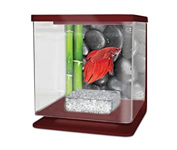 PACIFIC Acuario Betta diseño Zen Burdeos 2 L: Amazon.es: Productos para mascotas