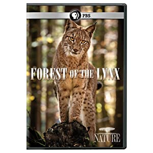 NATURE: Forest of the Lynx DVD