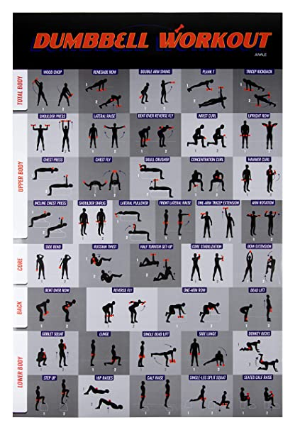 feaa78cd31e Amazon.com   Workout Poster - Dumbbell Exercise Poster Laminated ...