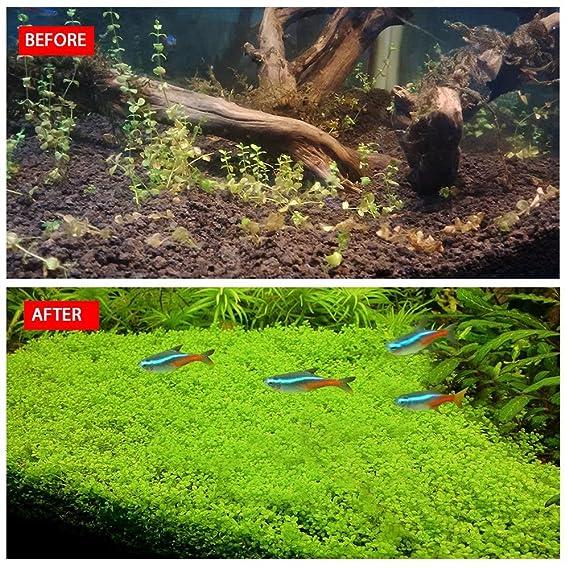 Semillas de plantas de acuario Pawaca, 10 g, semillas de césped acuático artificiales para decoración de acuarios en el hogar, pecera, césped, jardín, ...