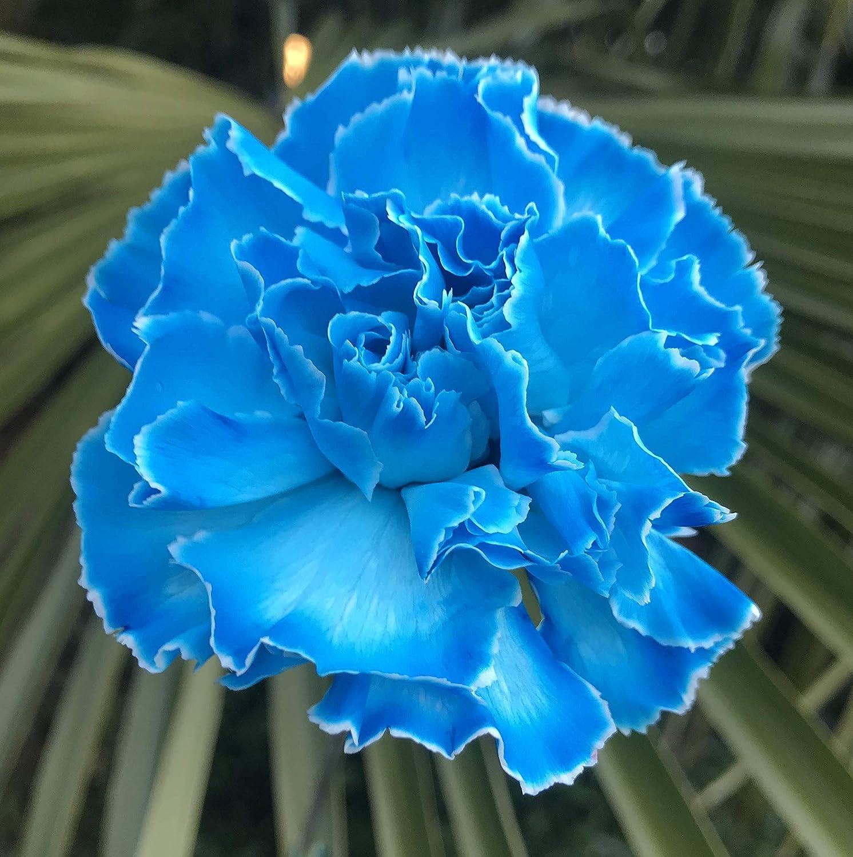 Colorante per fiori assorbente 10 g Blu