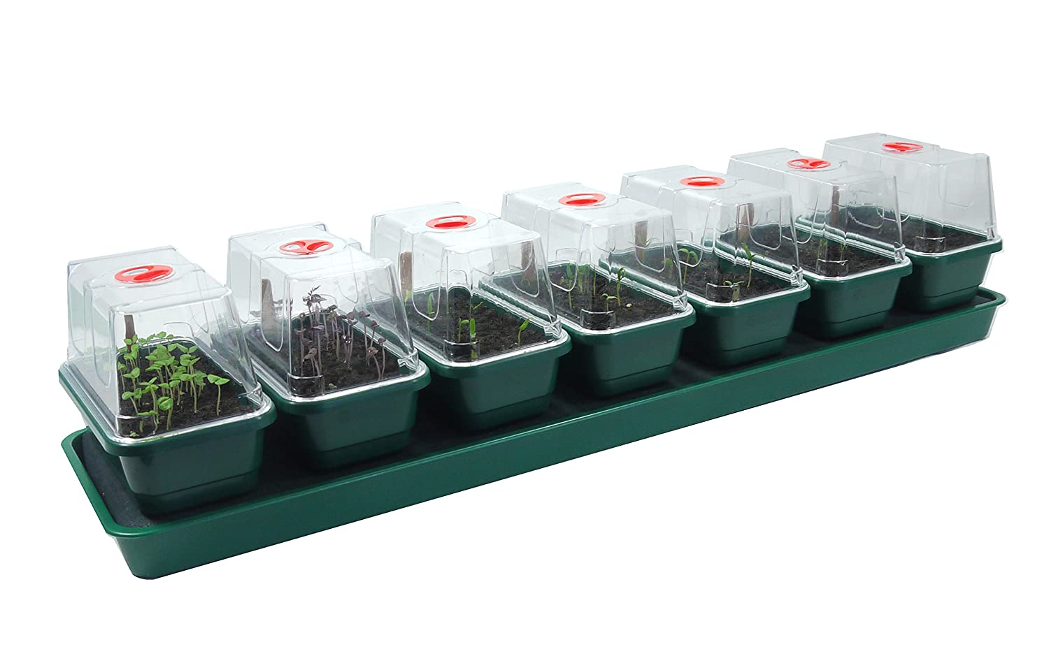 Britten & James® Self Watering Windowsill Nursery. 7 in 1 Windowsill Propagator set. Seven individual professional quality mini propagators with a unique capillary fed watering system. The clear lids have high sides so you can keep your tender plants