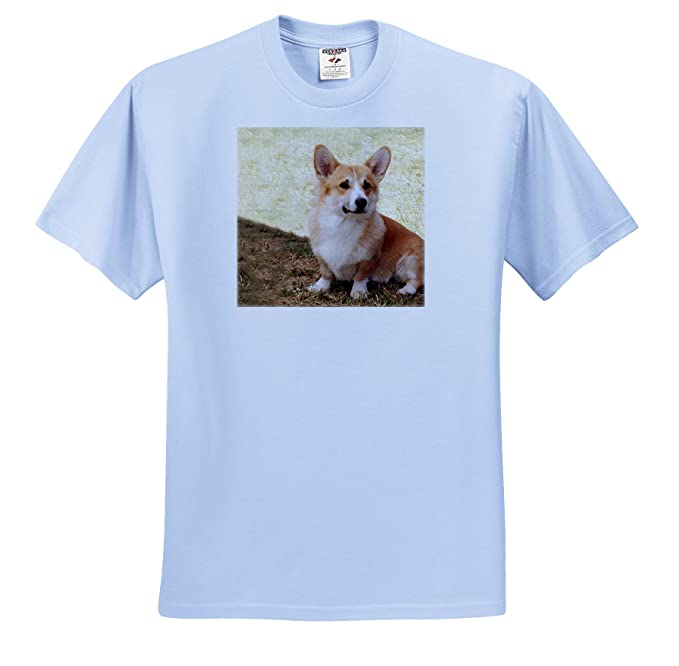 8efd131bd538 Amazon.com  Dogs Corgi - Pembroke Welsh Corgi - T-Shirts - Adult ...
