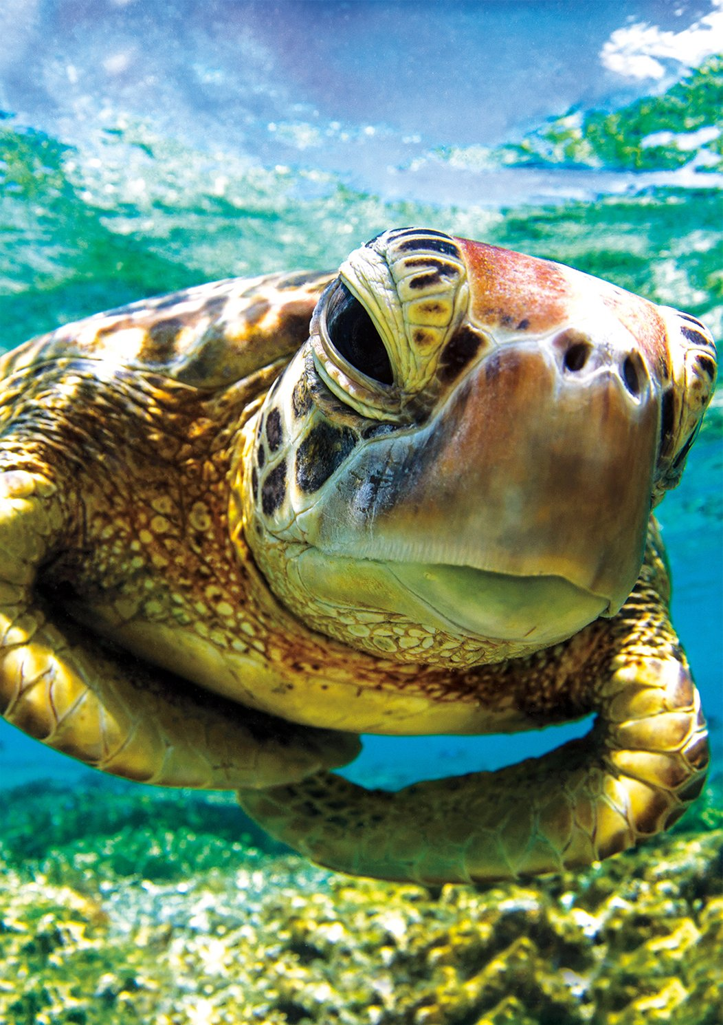 Buffalo Games - Earthpix Collection - Turtle Swimmer - 500 Piece Jigsaw Puzzle