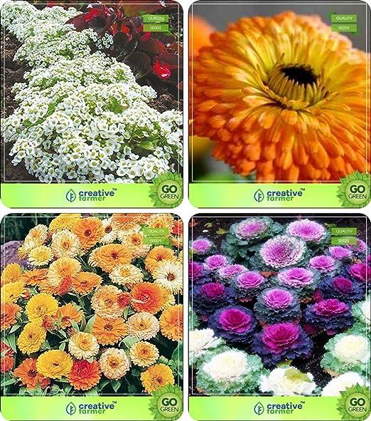 Semillas BloomGreen Co. Flor: Planta Florida purificador de aire ...