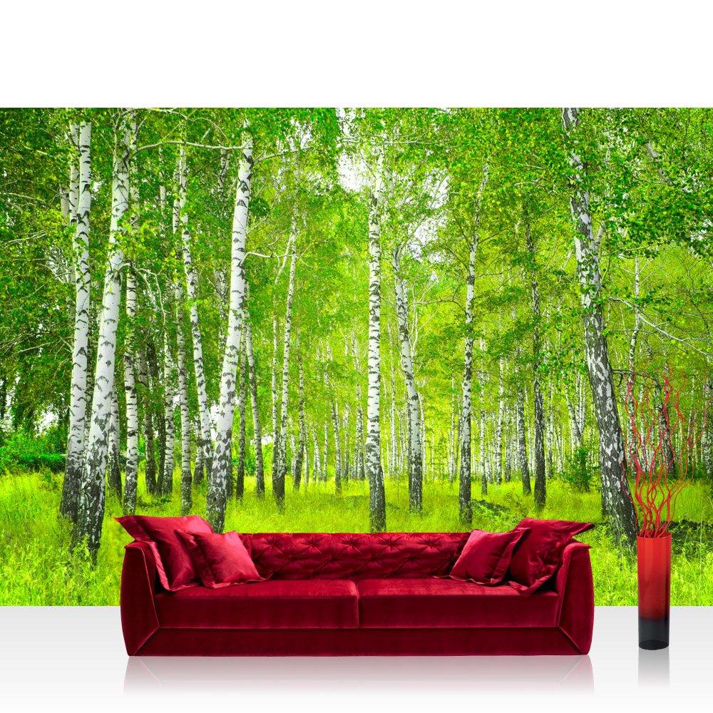 Fototapete birkenwald  Vlies Fototapete 300x210 cm PREMIUM PLUS Wand Foto Tapete Wand Bild ...