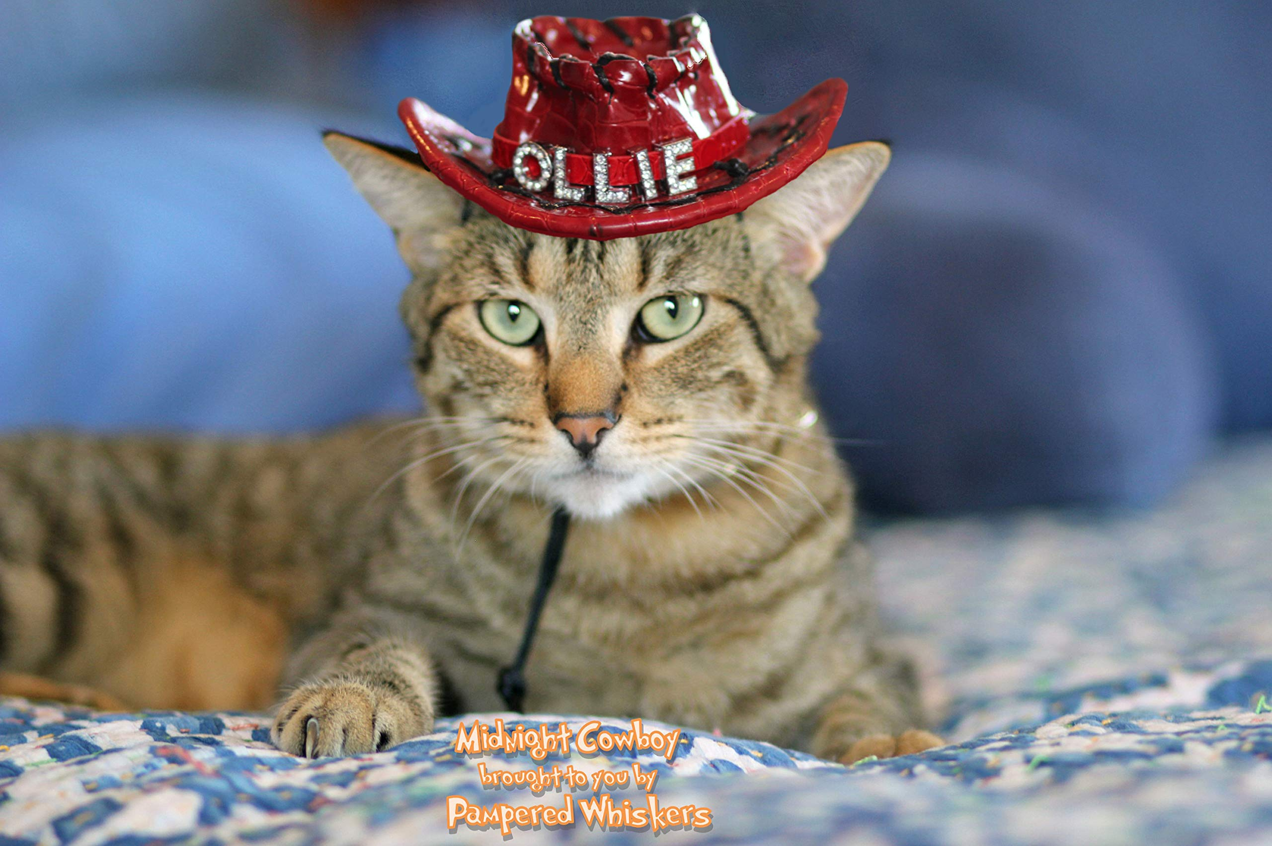 Pampered Whiskers Red Cowboy Hat for Dogs and Cats - personalized by Pampered Whiskers