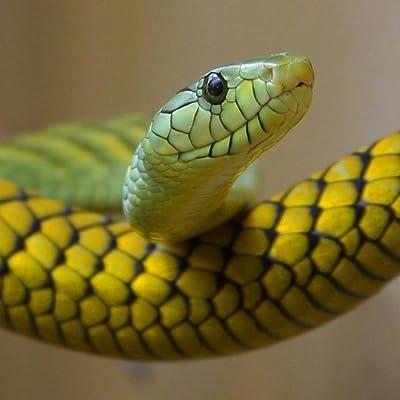 Especies de reptiles Trivia Quiz