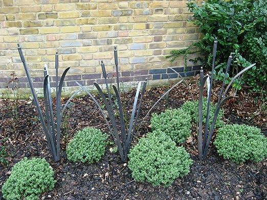 Un conjunto de 3 junco Cattail jardín planta apoyo Bare Metal ...