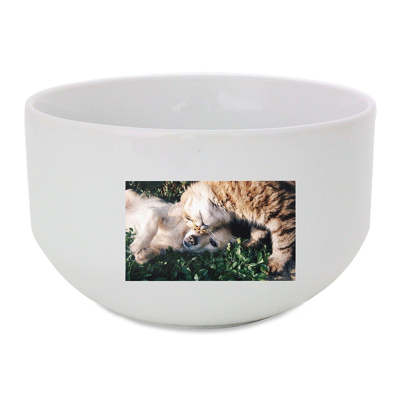 Amigos, gato y perro, gatos y perros, mascotas bol de cerámica ...