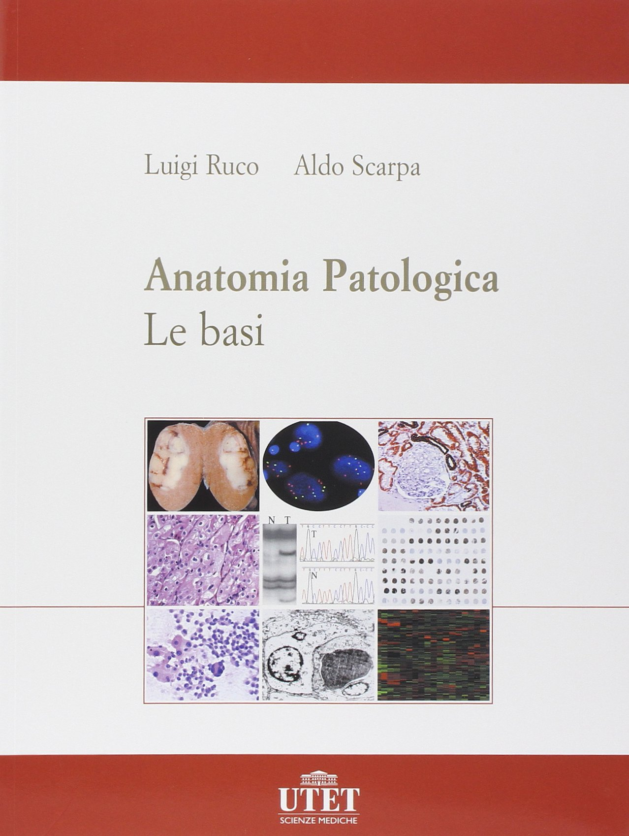 amazon anatomia patologica scarpa