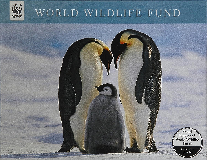 Amazon.com : WWF Penguins w/Babies Christmas Cards Box of 20 ...