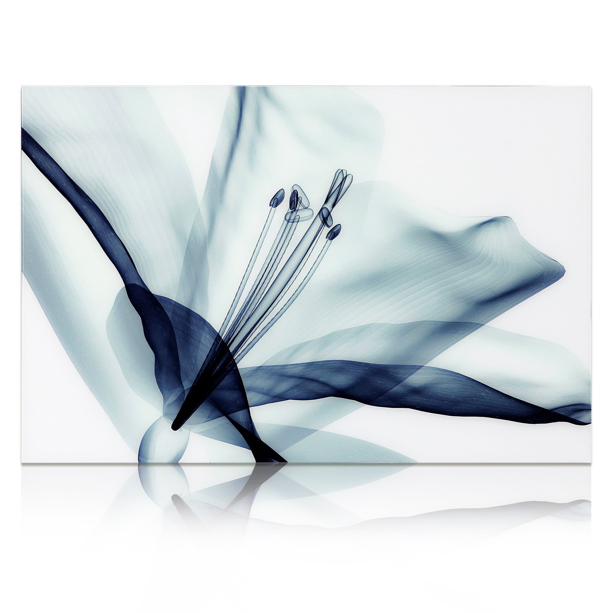 Empire Art Direct ''Amaryllis'' Frameless Free Floating Tempered Glass Panel Graphic Wall Art