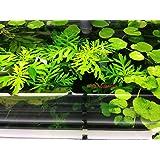 3 Water Wisteria (Hygrophila Difformis), Live Aquarium/Aquatic/Stem Plant by G&Z